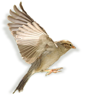 Sparrow Web Design Logo